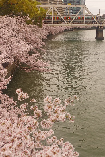 2017.4.10 大阪環状線 天満-桜ノ宮 323系1.JPG