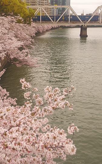 2017.4.10 大阪環状線 天満-桜ノ宮 クモヤ143系1.JPG