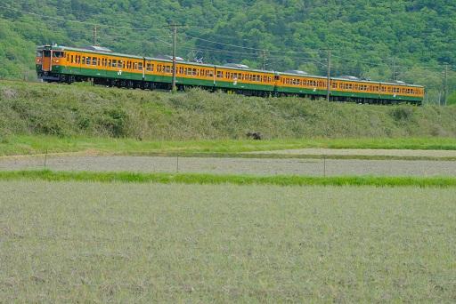 2017.5.4 山陽本線 上郡-三石 115系湘南色1.JPG