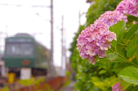 2019.6.23 叡山電鉄叡山本線 修学院付近1.JPG